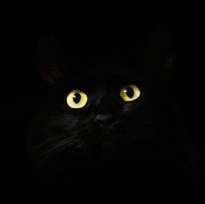 превью квеста Прятки в темноте Пермь