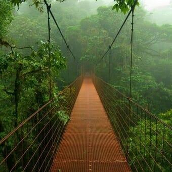 превью квеста Тайна джунглей Тверь
