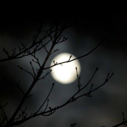 Главное изображение для квеста Дитя тьмы